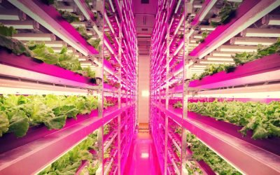 2018 Predictions: Increased Demand for LED Grow Lights
